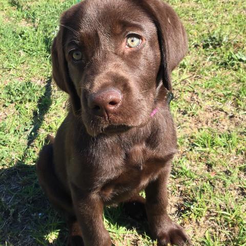 Stella puppy.jpg