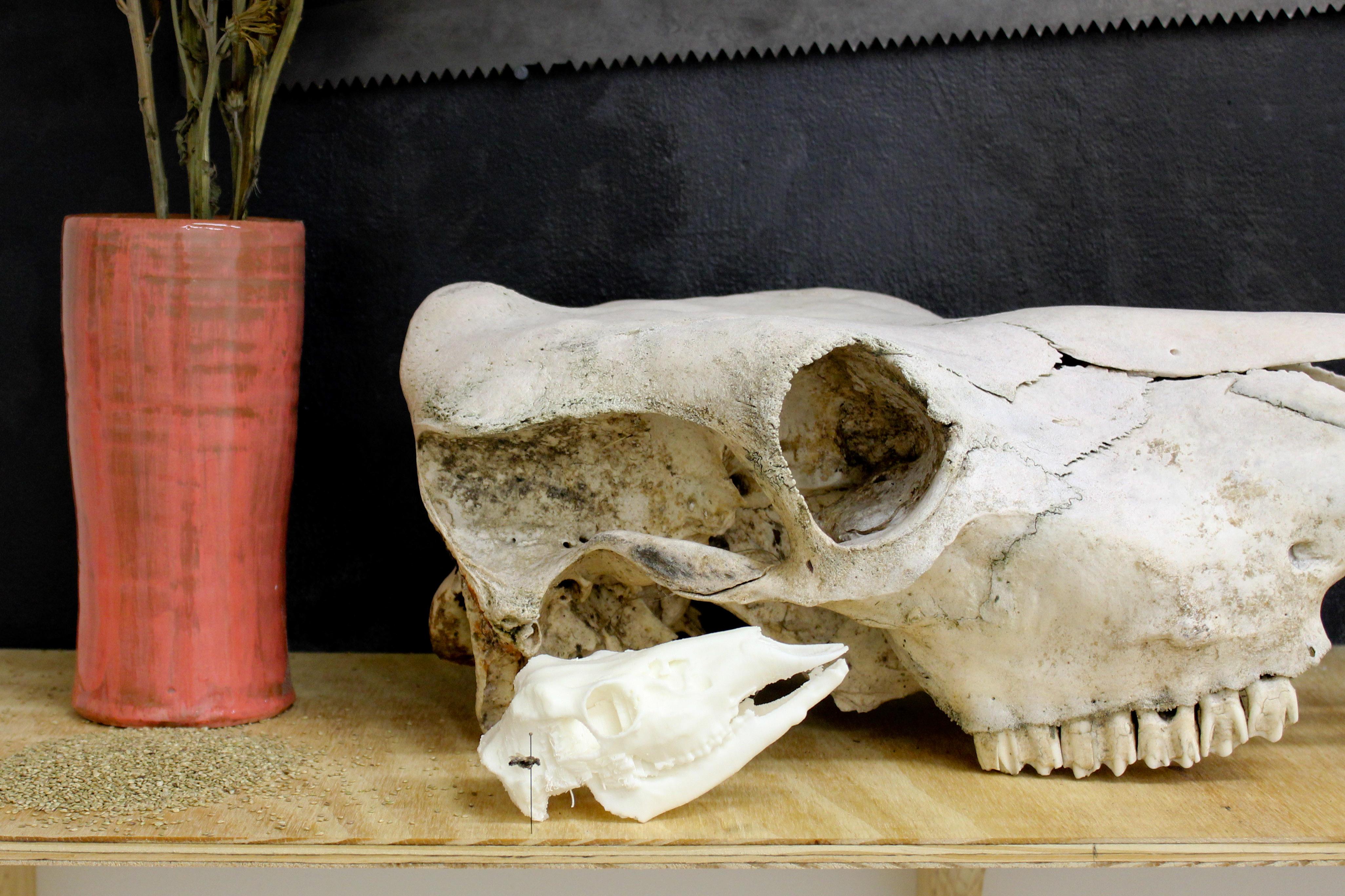 Natura Morta, For Web-5645