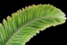 palm-print-green-plants-white-background