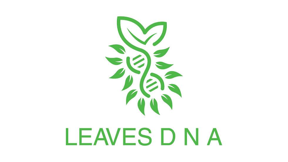 Leaf DNA