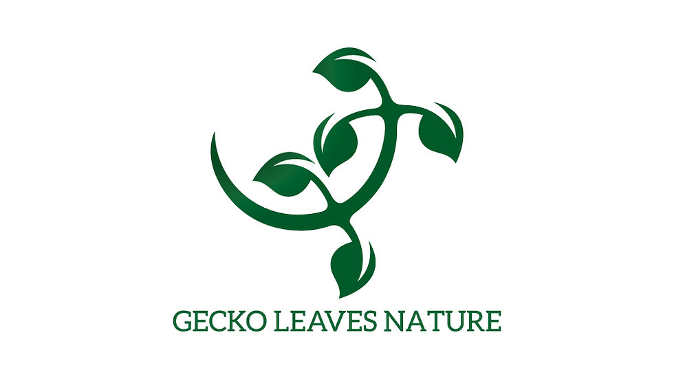 Gecko Leaves Nature