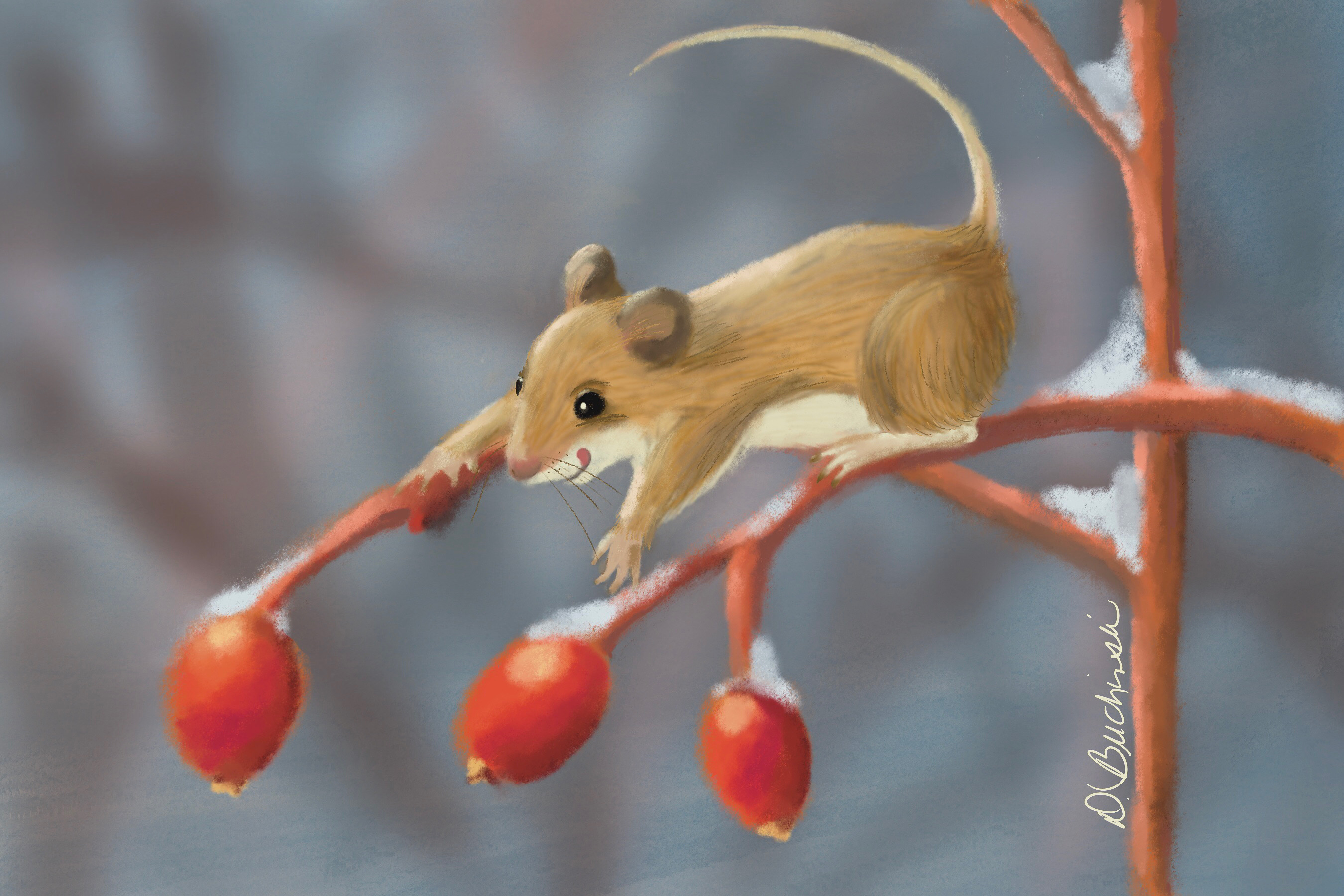 Rose Hip Treat for Mouse