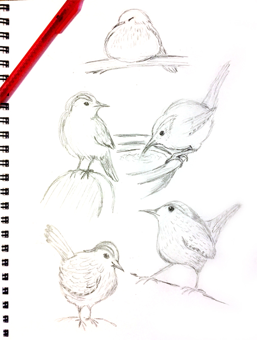 Wren sketches
