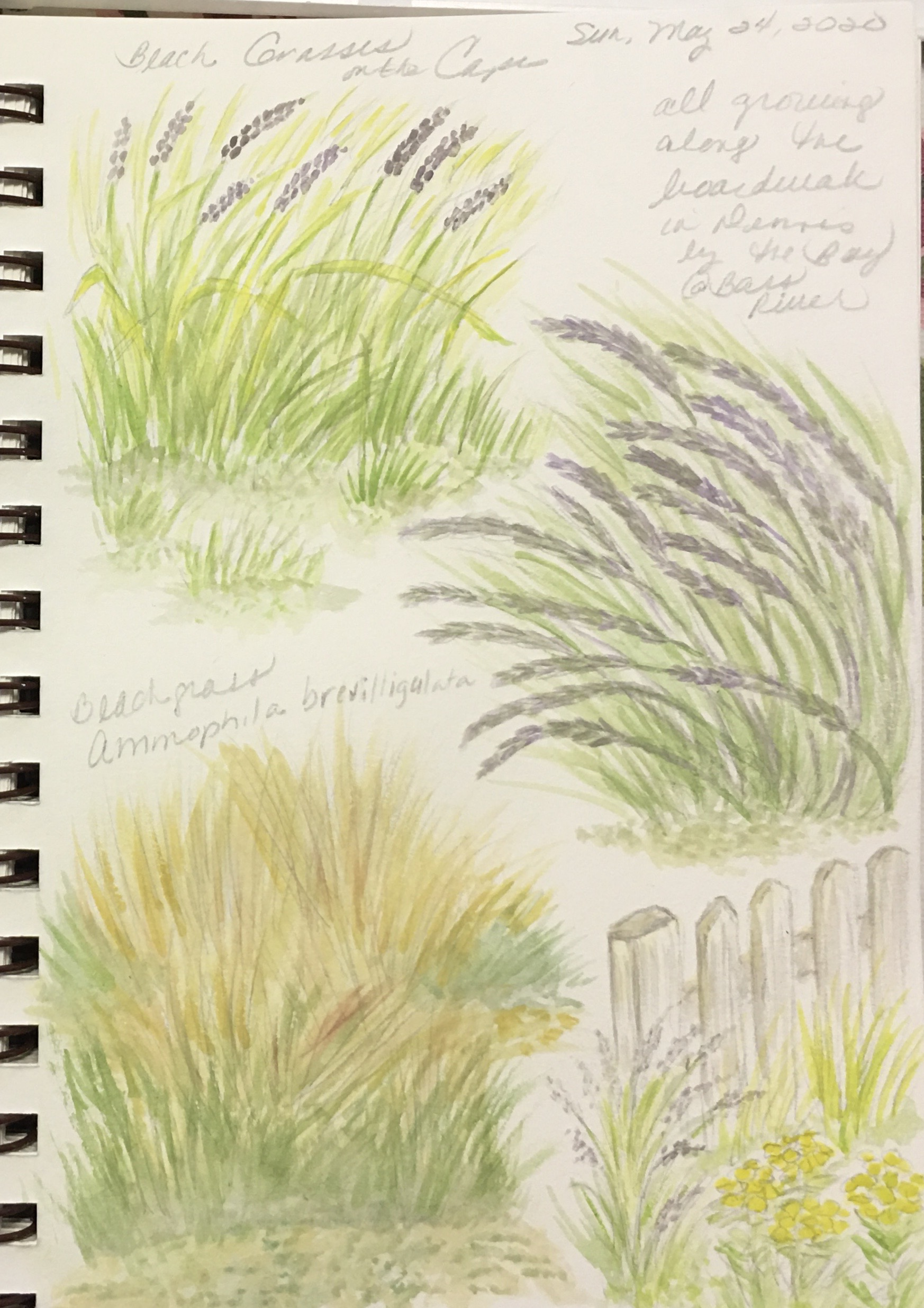 Various Beach Grasses