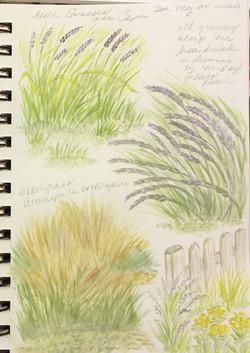 Various Beach Grasses