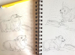 Ollie sketches