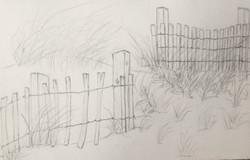 Beach Fence and Grass