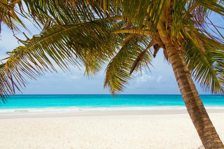 beach-landscape-nature-40976.jpg