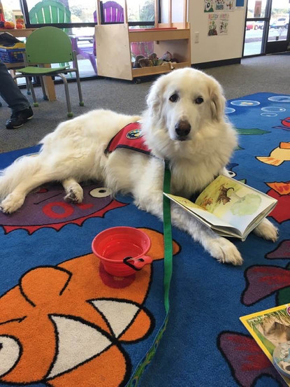 pet therapy literacy