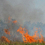 bushfire in grass