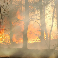 sunrise bush-Fire.jpg
