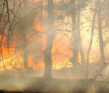 sunrise bush-Fire.jpg