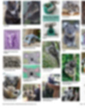 koalas on Pinterest.jpg