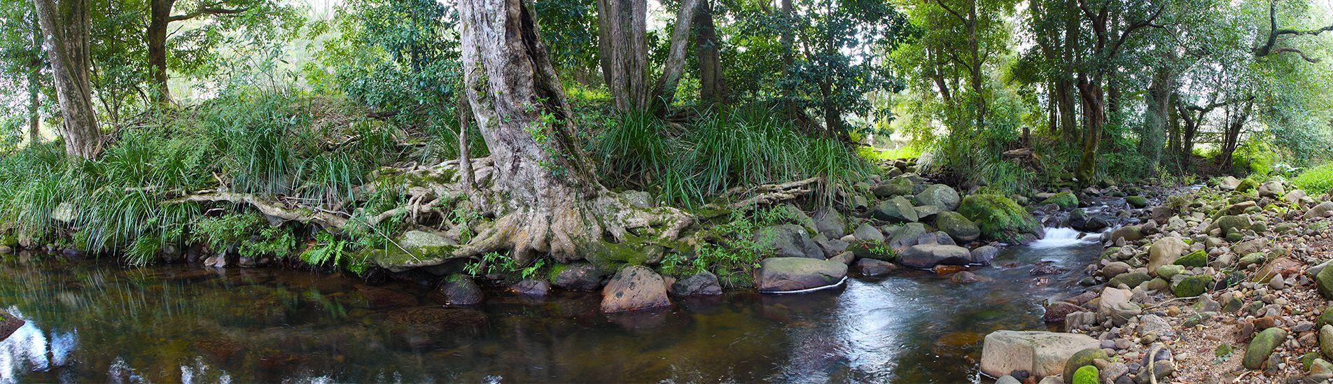 Broughton Creek