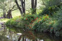 Broughton Creek reflections