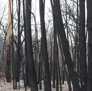 tathra_Fire_BurntTrees-810x540.jpg