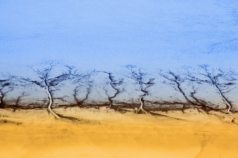 Salt Trees