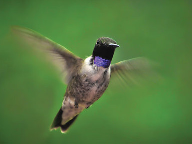 Wild Birds Unlimited Nature Shop Helps Connect You to Nature This April