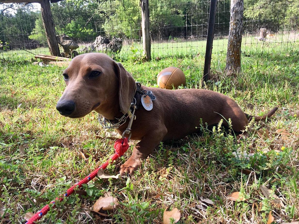 Dog Training New Braunfels