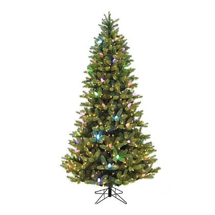 Montecito Fir Medium