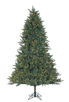 Ackley Spruce