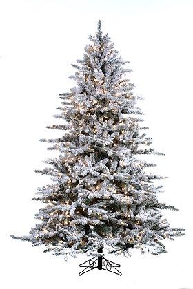 Snowy Mountain Pine