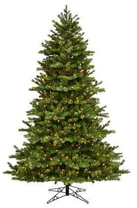 Grand Leyland Spruce