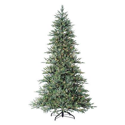 Williamsburg Pine