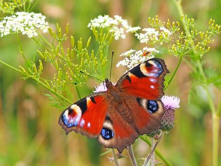 Efekt leptira - ciklus osobne promjene