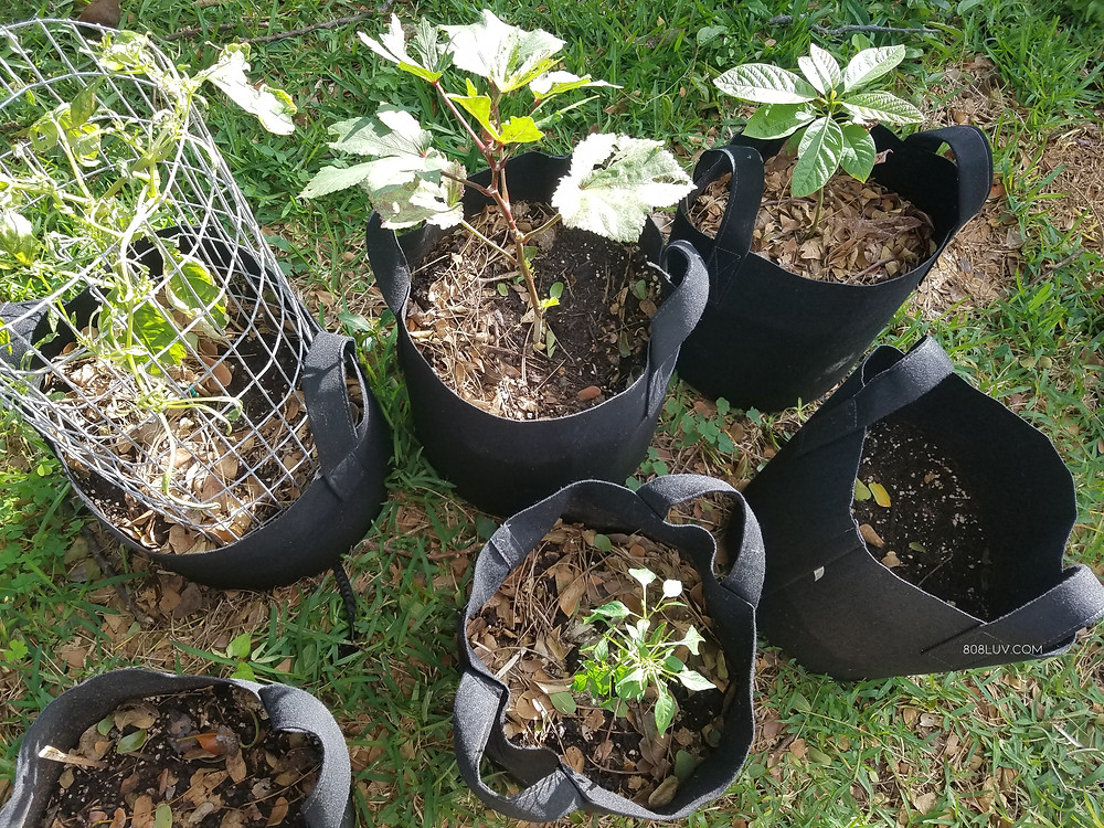 A garden can be as simple as a few grow bags in they yard.