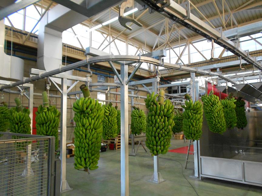 Transportador_Inox_de_plátanos