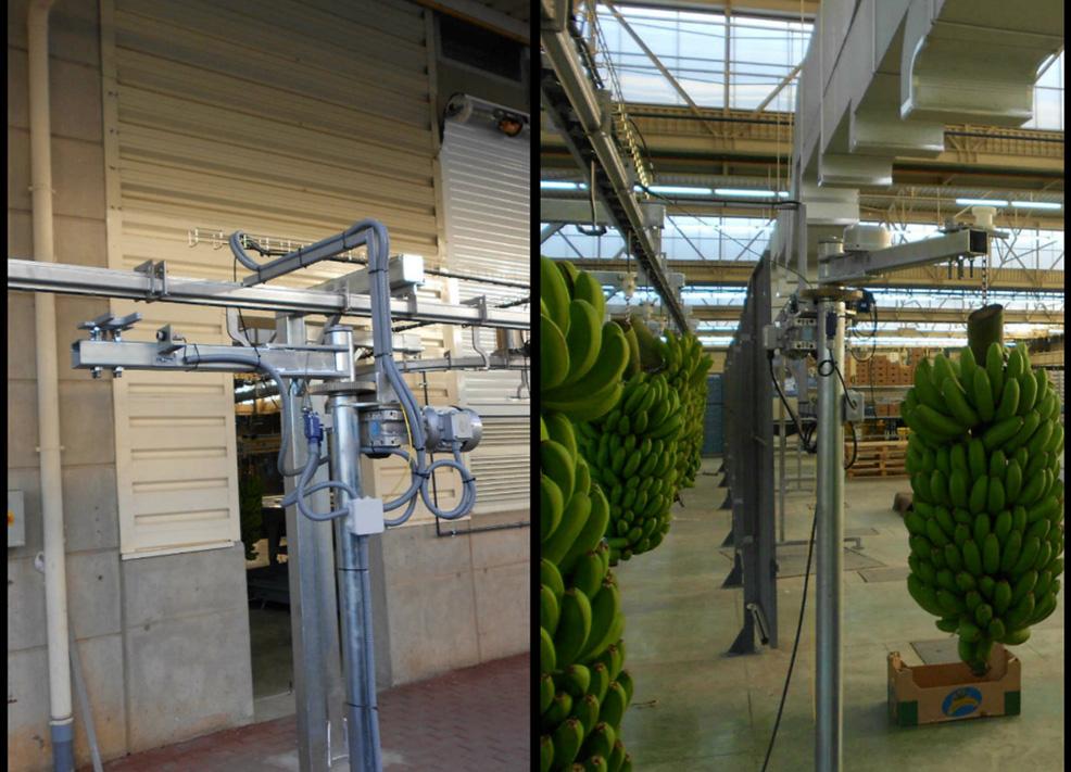 Cargador - descargador de plátanos
