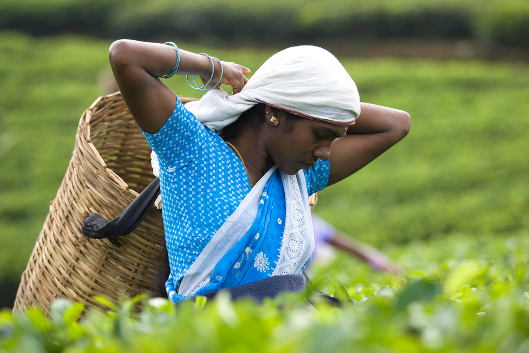 Documentary   Ceylon Tea