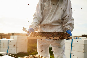 Beekeeper with honey frame