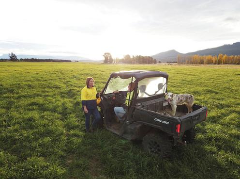 Cattle Farm, North East Tasmania