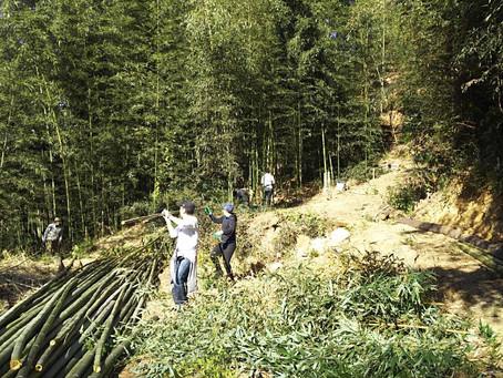 山廬整備の報告 小春の中、竹伐り作業に汗