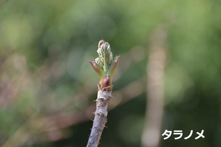 芽吹きのころ