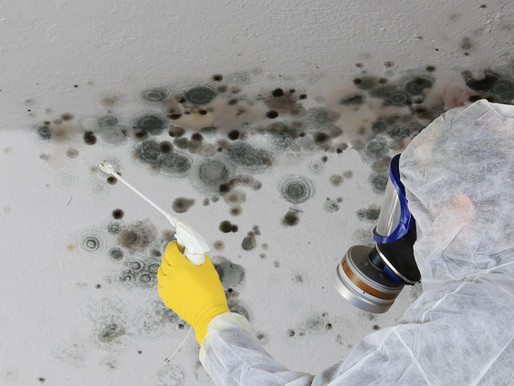 Mold Remediation in Schools & Commercial Buildings