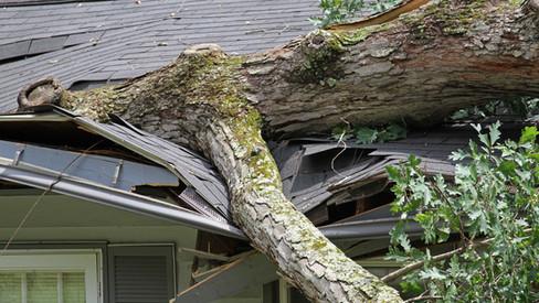 Wind Damage Problem in Florida.jpg