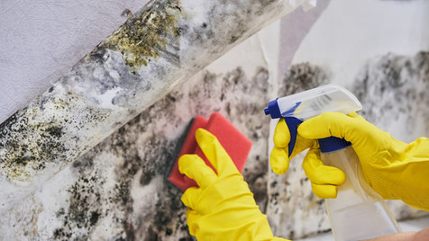 Commercial Mold Remediation in Florida 2