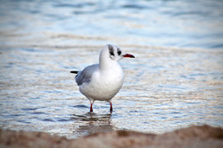 mouette cannes