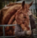 love-for-animals-3698639_1920_edited.jpg