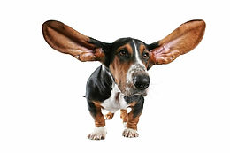 Case Study 03: Ear Cleaner for dogs