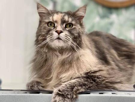 El primer baño sin dramatismo para este gato gracias al método DAATA