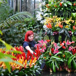 Interim Engagement Executive, Kew Gardens