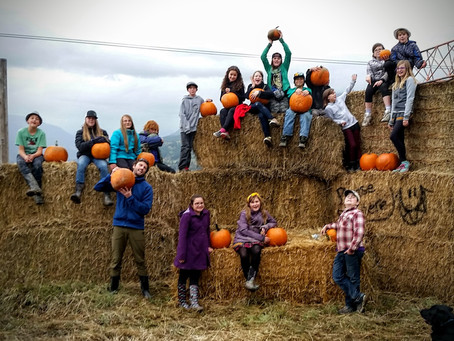 Mr C's Class Visit to the Pumpkin Patch