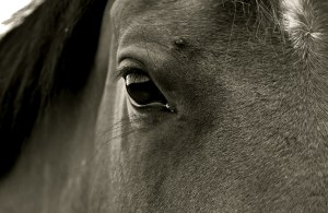Equine Assisted Coaching
