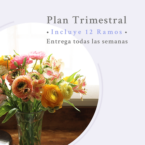 Plan Trimestral- Mantención semanal