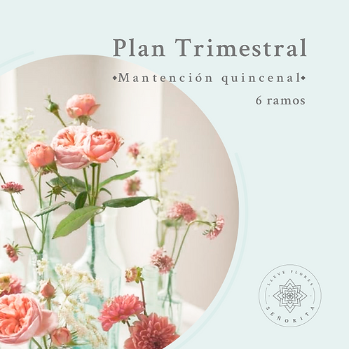 Plan Trimestral- Mantención quincenal