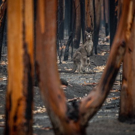 Hot But Not Bothered: Global Climate Shift Gets Chilly Reception Down Under